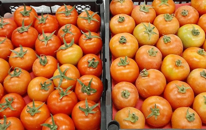 طماطم طازجة