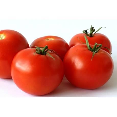 بذور طماطم 90-90